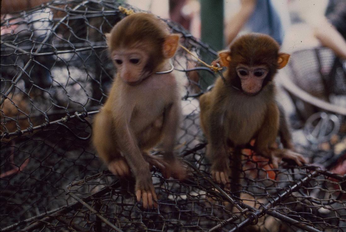 Baby Monkeys in Qingping Lu