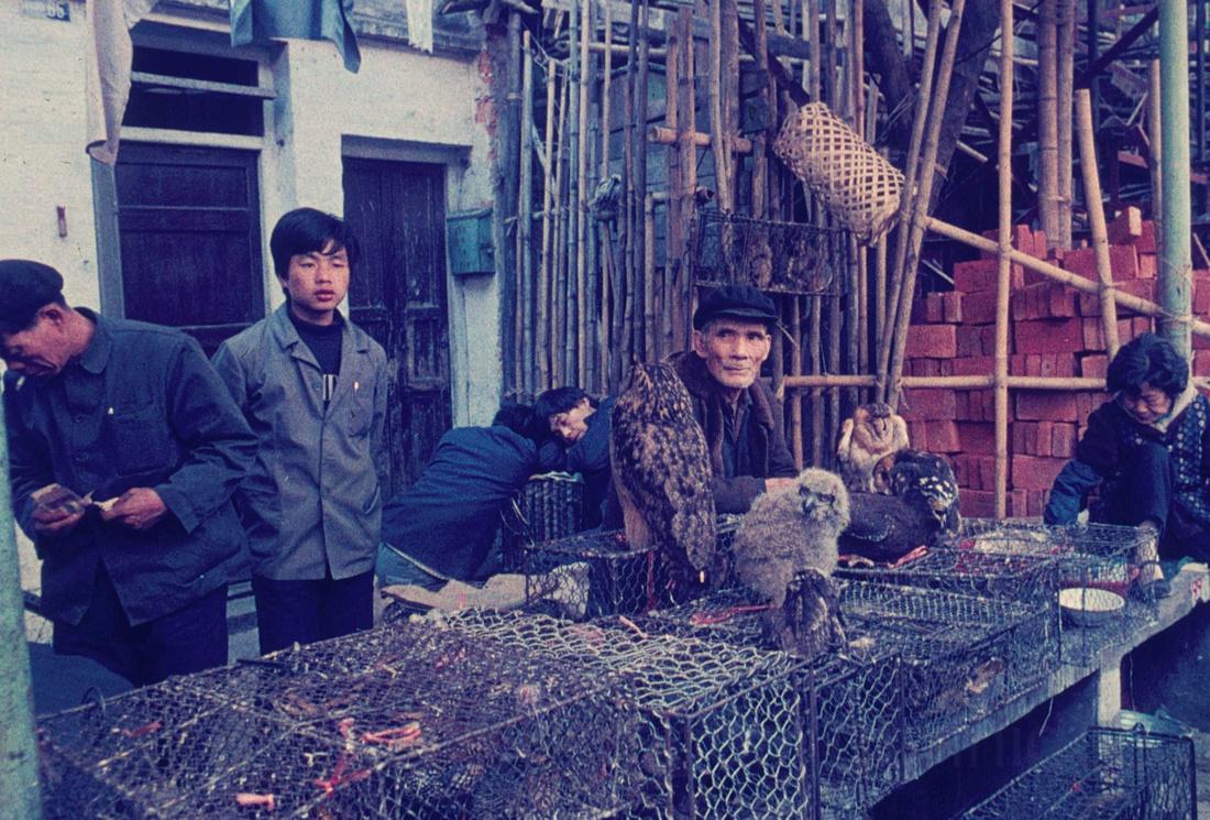 The Owlman at Qing Pling Lu
