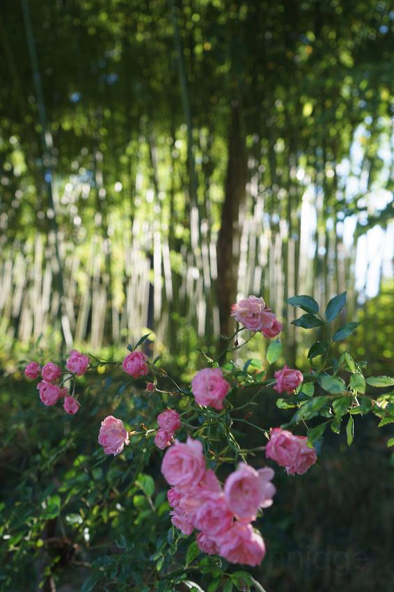 Jardin Albert Kahn 10