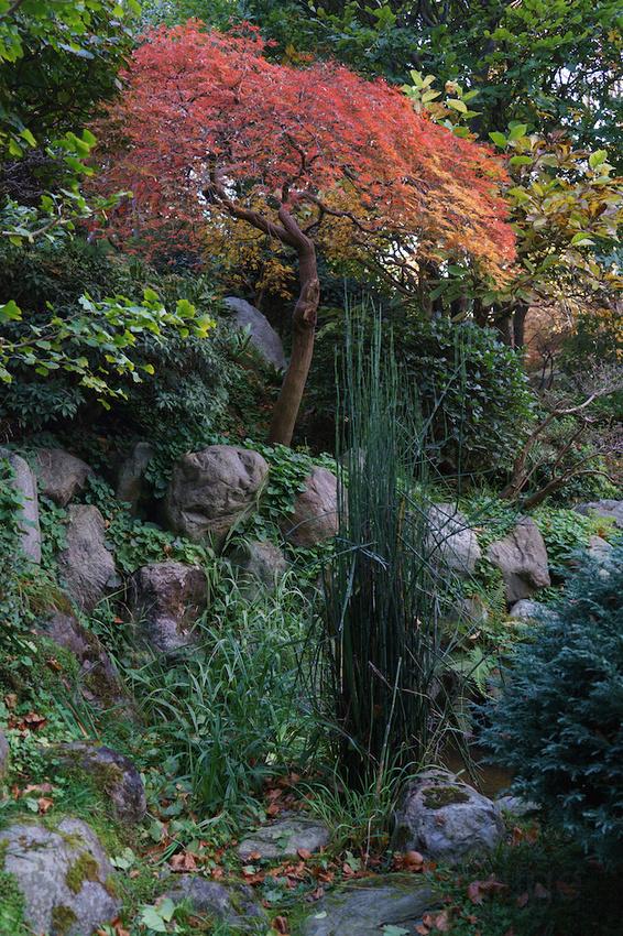 Jardin Albert Kahn 12