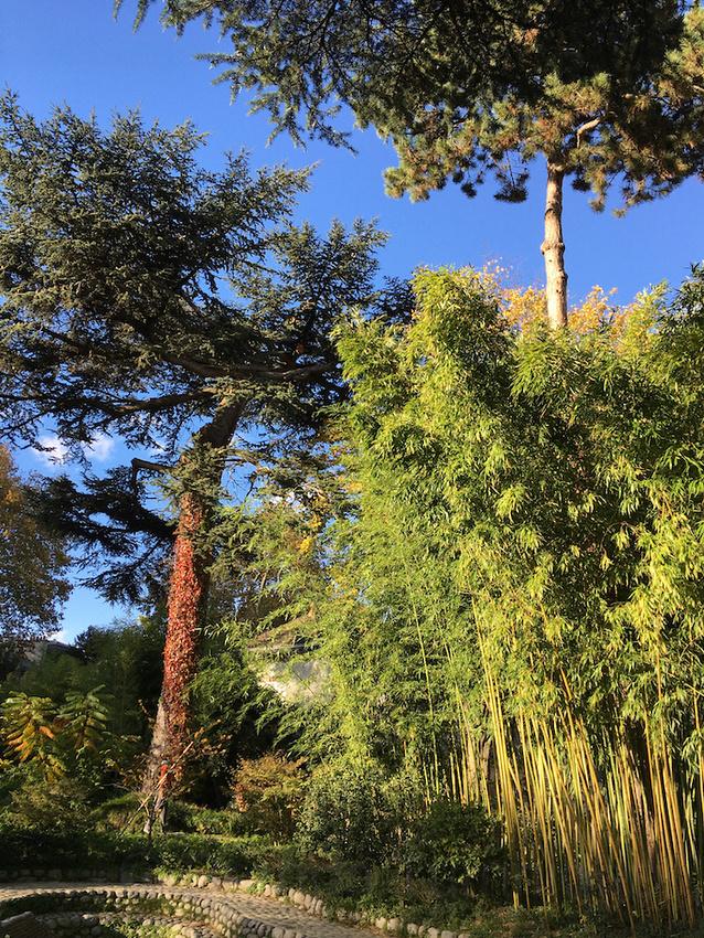 Jardin Albert Kahn 15